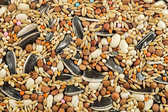 birdseed mix, including sunflower seeds