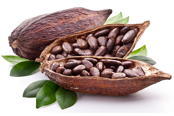 cocoa beans and cacao tree leaf