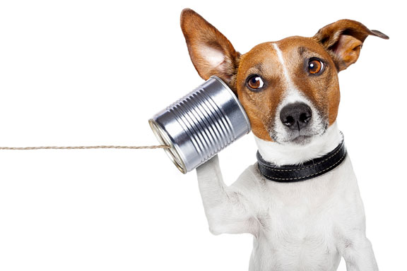 dog listening on a tin can telephone