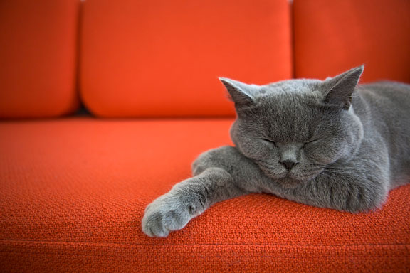 gray cat sleeping on an orange couch