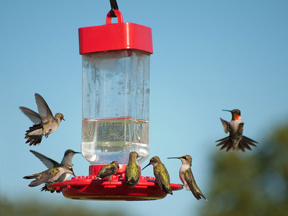 hanging hummingbird feeder