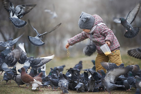child feeding a cluster of gray pigeons