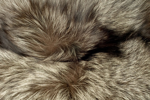 polar fox fur