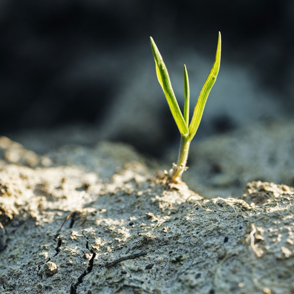 blade of grass in dry soil