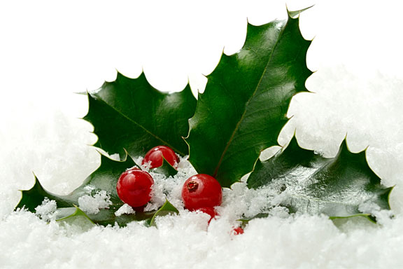 holly berries and leaves on snow