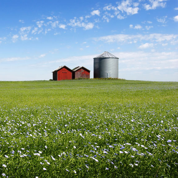 flax field in Manitoba