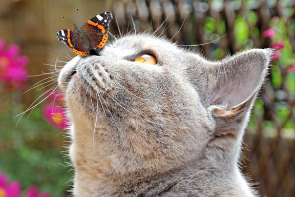 butterfly on a kitten nose