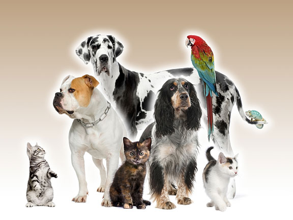 Pet Cats, Dogs, Bird, and Reptile