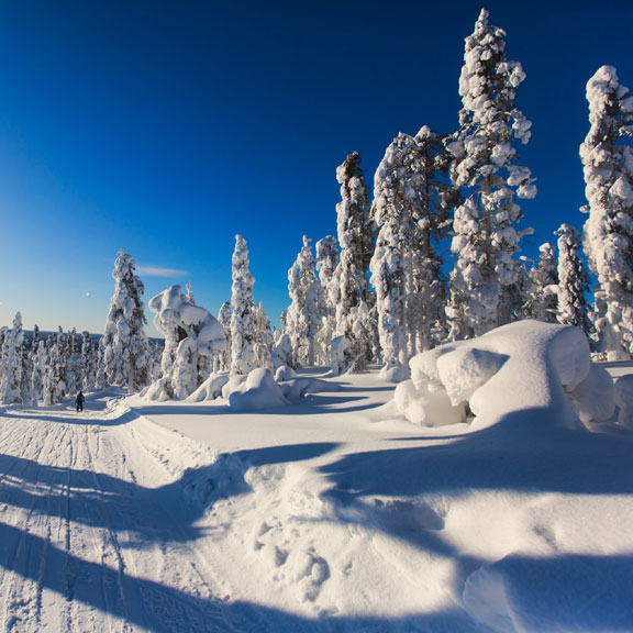 snow-covered ski slope and evergreen trees