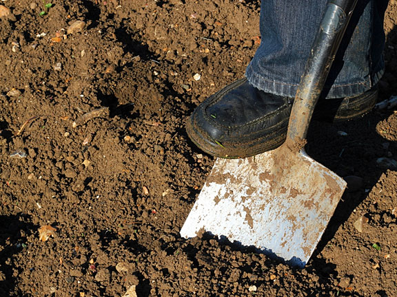 foot pushing a spade to dig into the ground
