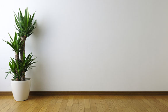 wall with yucca plant accent