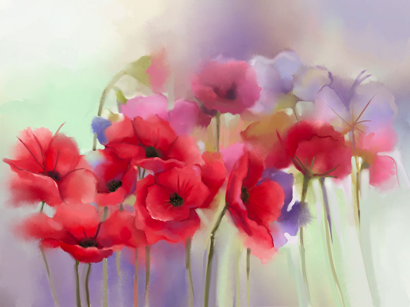 watercolor painting - red poppies